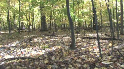 Video of a forest during autumn with leaves covering the ground.